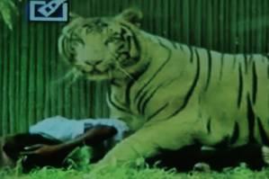 Pelajar Tewas Diterkam dan Digigit Lehernya  Oleh Harimau di Kebun Binatang...!!!