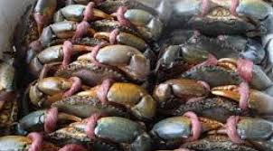 kepiting telur