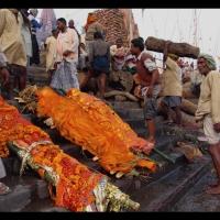 Busyett dah...Puluhan mayat mengambang di sungai Gangga ... Ini Sebabnya...!!!