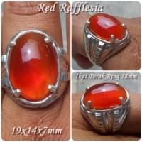 Batu Red Raflesia Asli Bengkulu...Cantik Secantik Bunga Raflesia Tapi Gak Mambu Lho...Malah Harum Duit tuh...