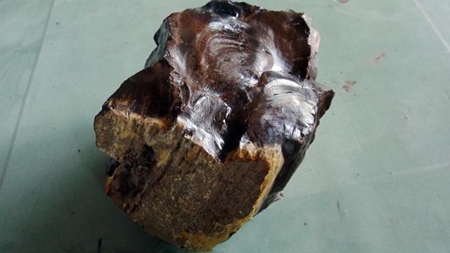batu fosil kayu eboni