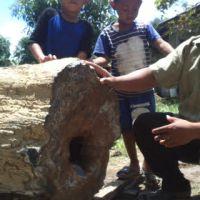 Heboh...Ditemukan Batu Fosil Kayu Ulin Seberat 300 Kg...Istimewa...