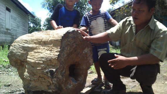 bongkahan batu fosil kayu ulin