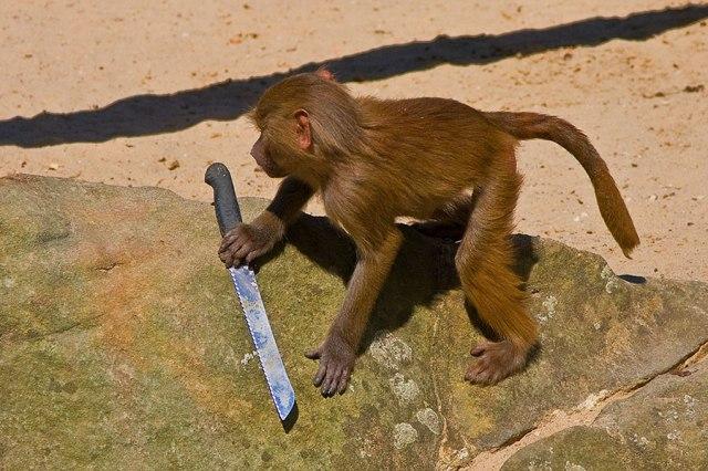 monkey knife pisau monyet