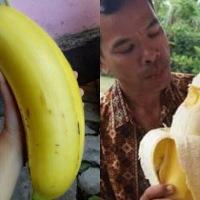 Pisang Raksasa Tanaman Unik Asli Papua...Hanya Ada Di Papua...!!!
