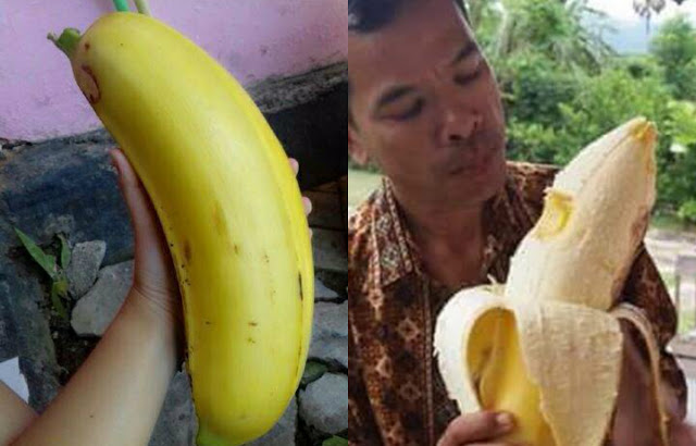 buah-pisang-raksasa-papua