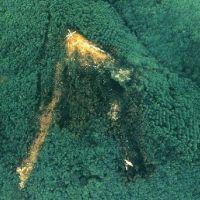 Foto Udara Pesawat Japan Airlines Menabrak Gunung Ini Mengerikan..!
