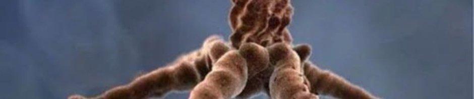 Virus dilihat dari Mikroskop Elektron